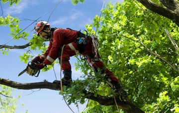 find trusted rated Scottish Borders tree surgeons