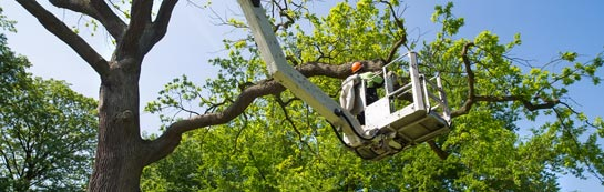 Scottish Borders tree surgery services