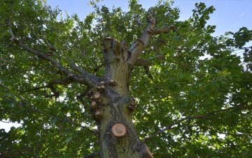 what is Scottish Borders tree surgery?